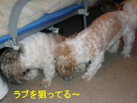 mint_20080713_1