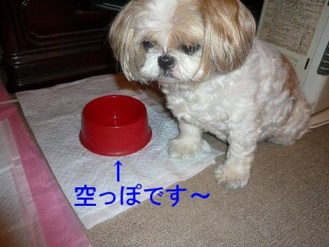 bibi_20080718_2
