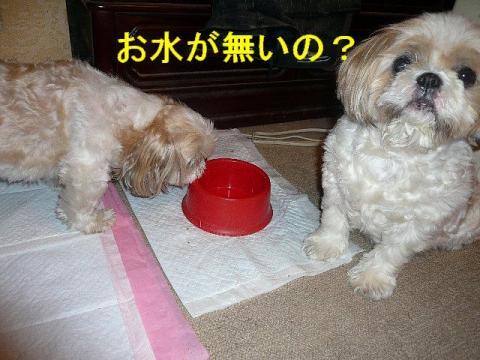 mint_20080718_2