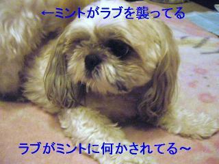 love_20060809_2