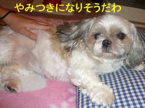 love_20080720_4