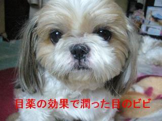 bibi_20060812_1