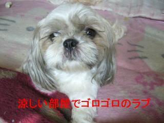 love_20060812_1