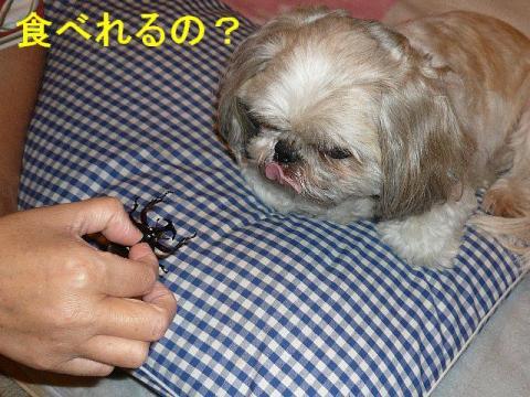 love_20080726_1