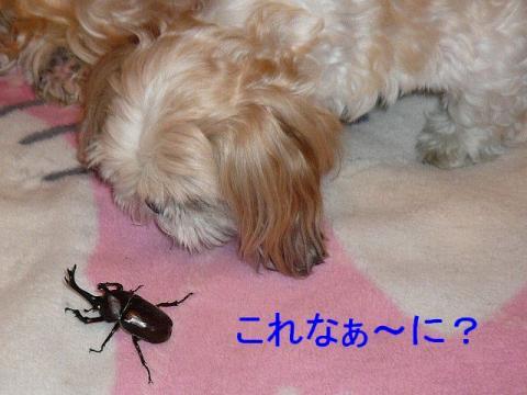 mint_20080726_1