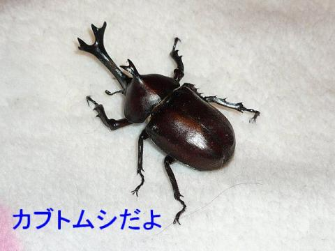 musi_20080726_1