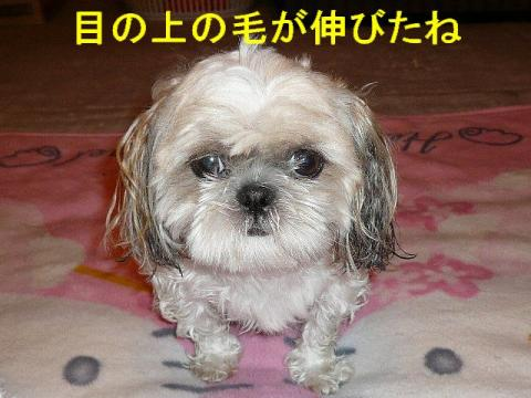 mint_20080725_2
