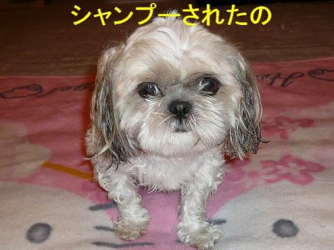 mint_20080725_1