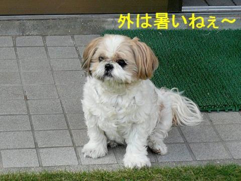 bibi_20080727_1