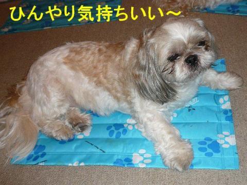 love_20080727_4