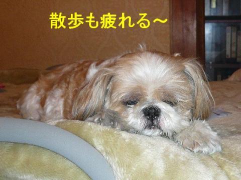 bibi_20080727_2