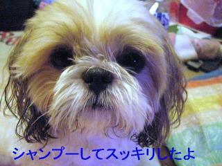 bibi_20060818_1
