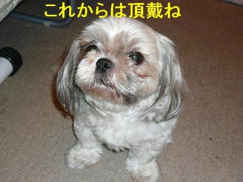 love_20080731_3