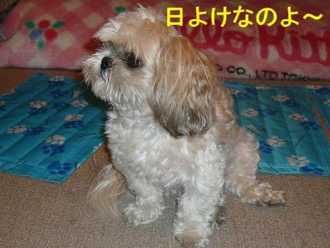 mint_20080801_3