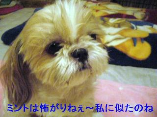 bibi_20060819_1