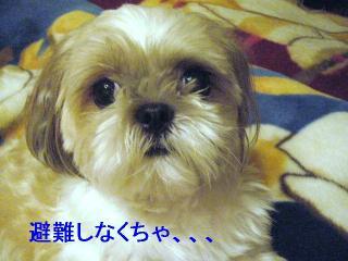 mint_20060819_3