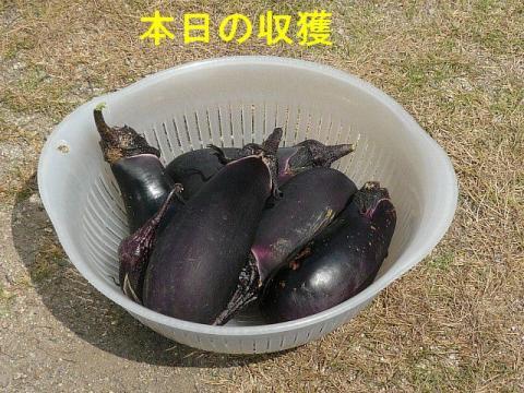 nasu_20080803_2