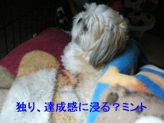 mint_20060820_5
