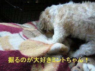 mint_20060820_7
