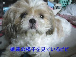bibi_20060820_1