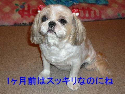 bibi_20080911_2