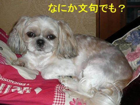 mint_20080808_2