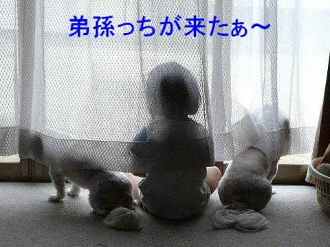 lovemint_20080810_2
