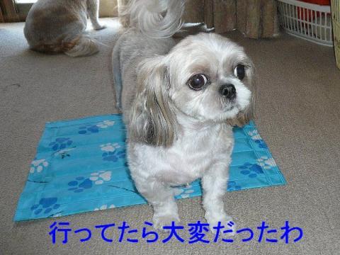 mint_20080817_1