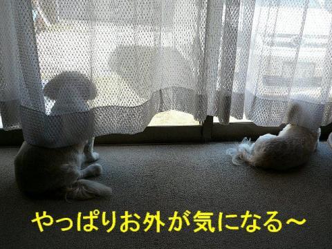 bibimint_20080810_1