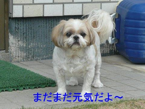 bibi_20080819_2