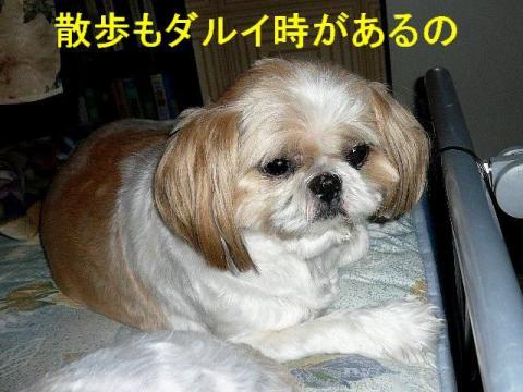 bibi_20080821_1