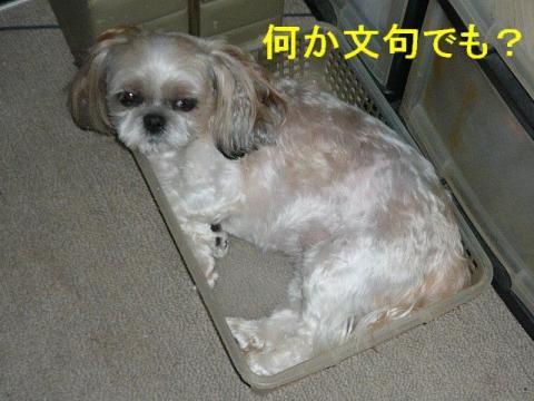 mint_20080820_4