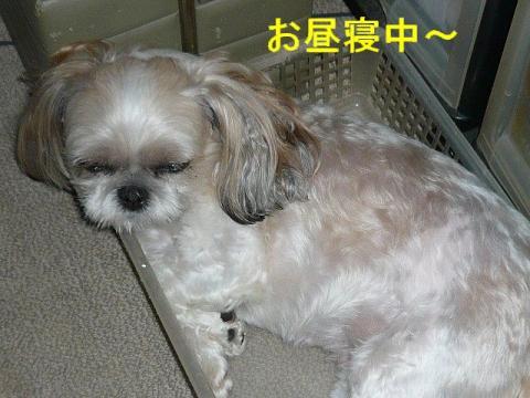 mint_20080820_1