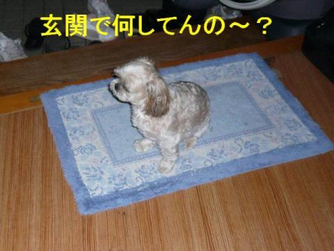 mint_20080824_1