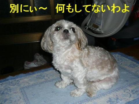 mint_20080824_3