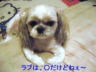 love_20061117_3