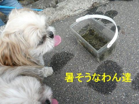 mint_20080826_1