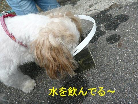 mint_20080826_2