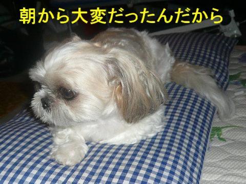 mint_20080829_2