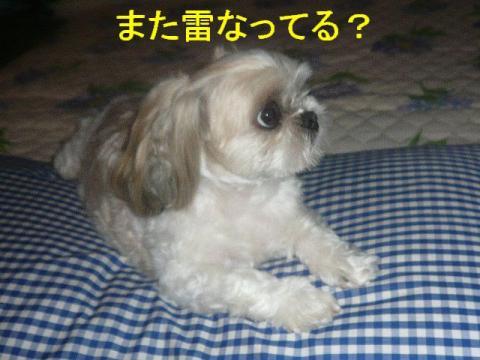 mint_20080829_4