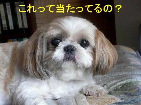 bibi_20080905_1