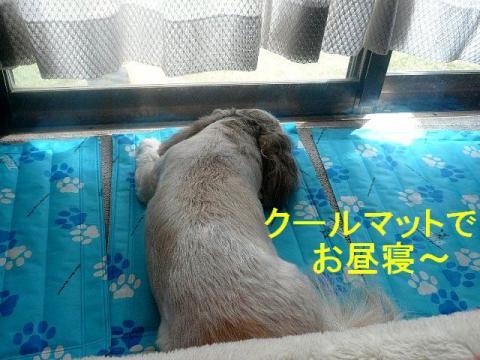 love_20080831_1