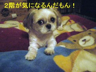 mint_20060828_1