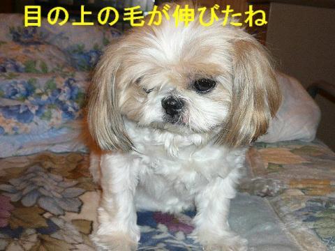 bibi_20080911_1