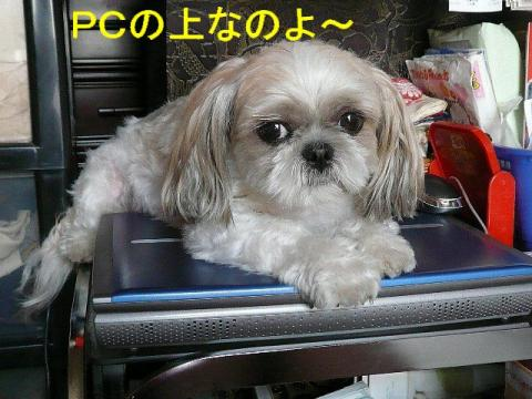 mint_20080909_3