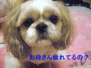 love_20060901_1