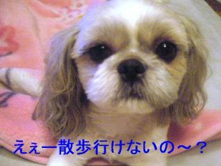 love_20060831_1