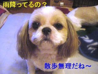 bibi_20060831_1