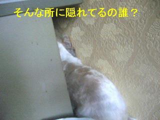 mint_20060910_1