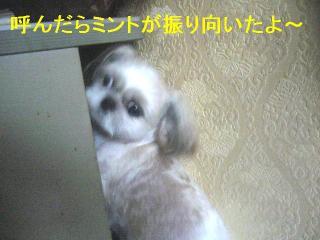 mint_20060910_2